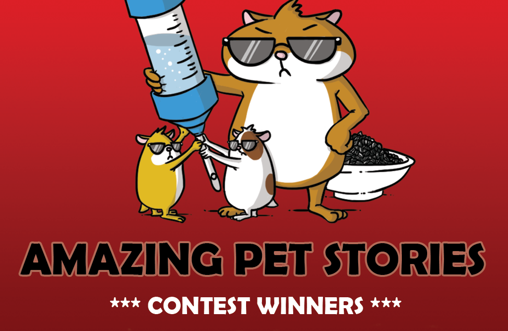 Amazing Pet Stories – Winners!