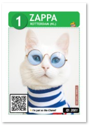 Cat_Zappa_Card