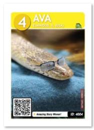 Reptile_Ava