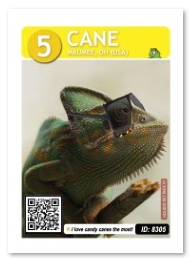 Reptile_Cane