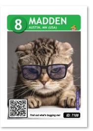 madden_card_web